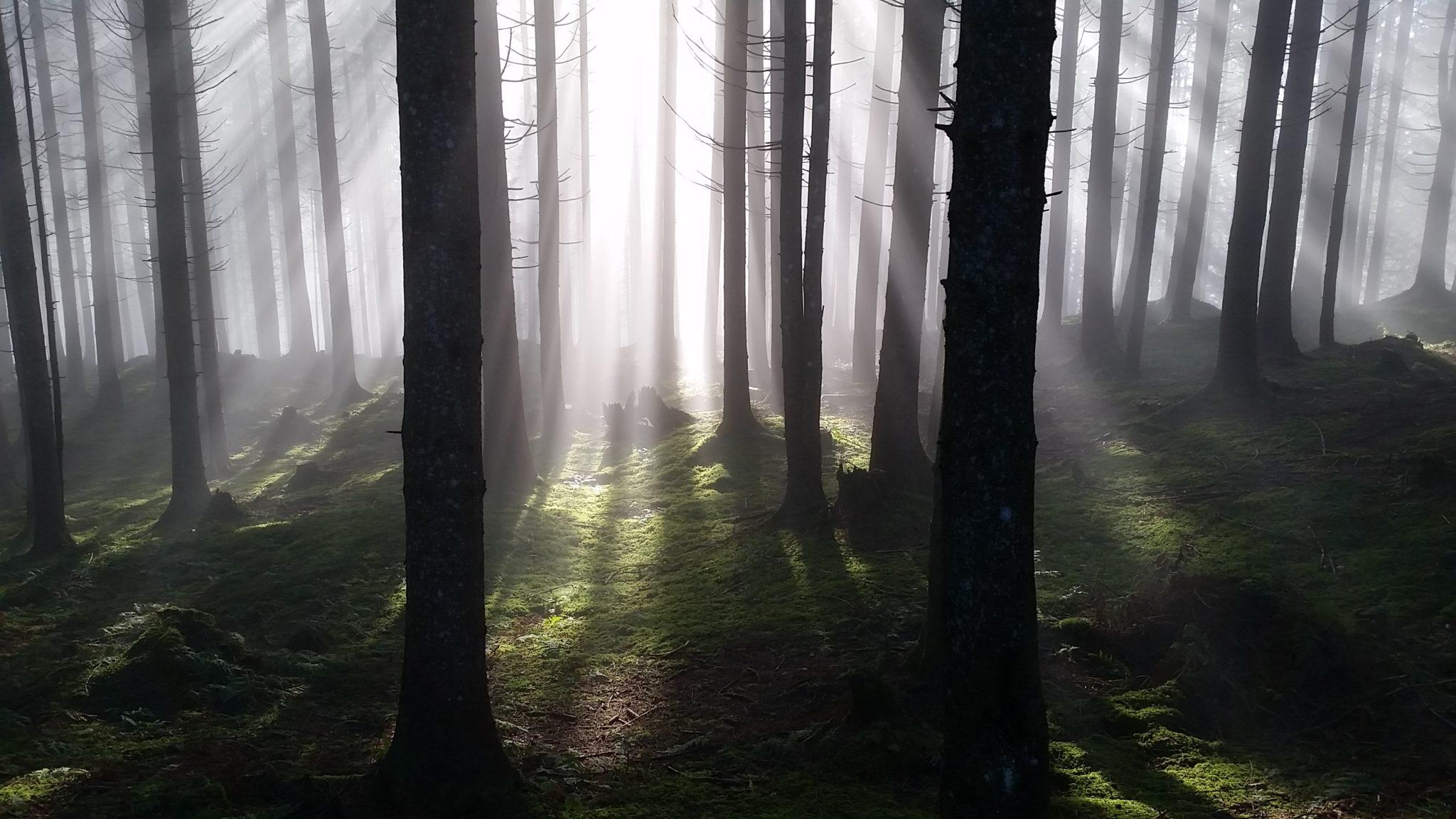 Wald Gesäuseberge Gassner
